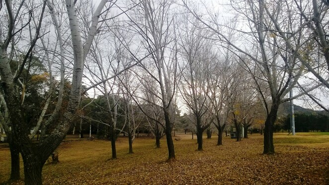 how to love winter in Canberra