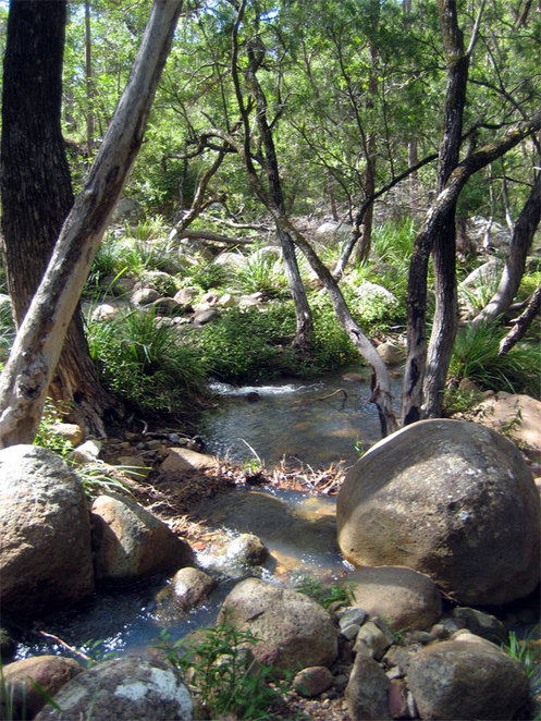 Creek at Mt Barney