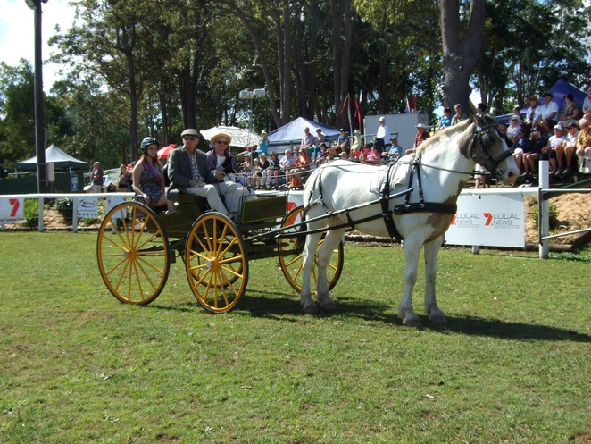 noosa, show, art, exhibition, opening, grand parade, agriculture, equestrian, livestock, entertainment