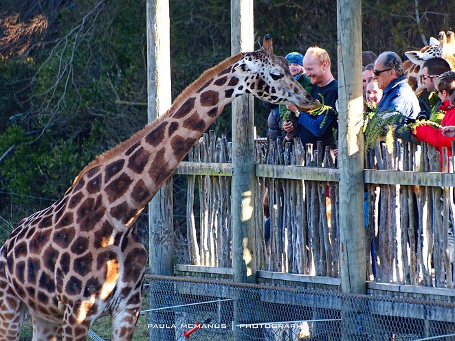 Orana Wildlife Park Christchurch