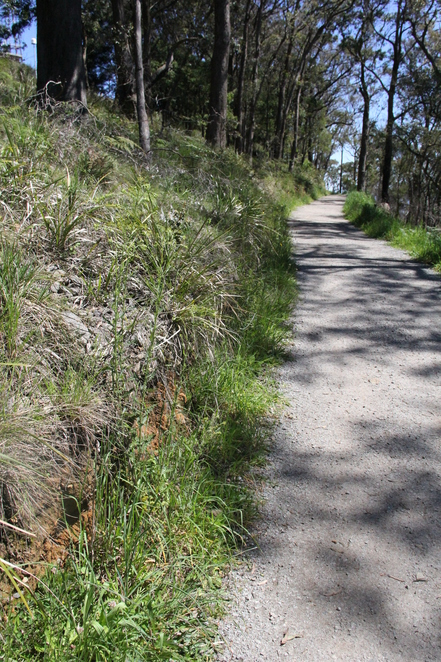 Pathway to a hang glider launch, Mount Dandenong