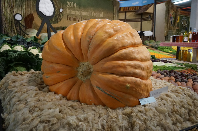 Pumpkin at EKKA