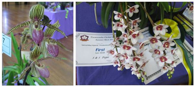 Toowoomba Orchid Show winners more