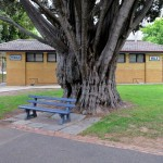 Trees and seats aplenty at Johnstone Park