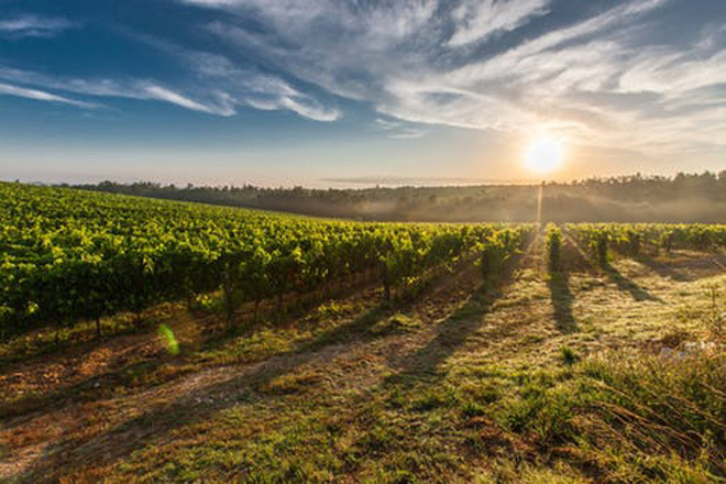 Victoria Melbourne Geelong Bellarine Peninsula Food Wine Lamb Harvest Winter Shiraz Jack Rabbit Wine Wines Wineries