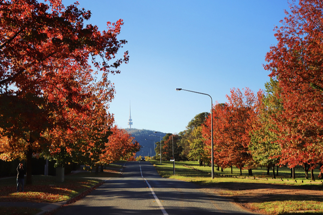 Canberra, autumn, leaves, trees, walks, photography