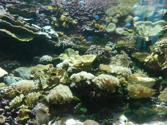 coral, reef, reef hq, Townsville, Queensland