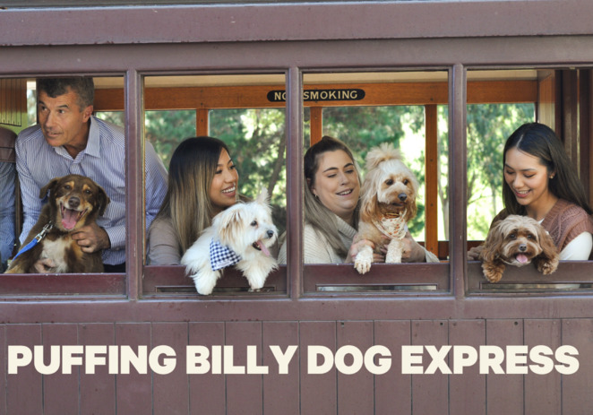 Puffing Billy Dog Express