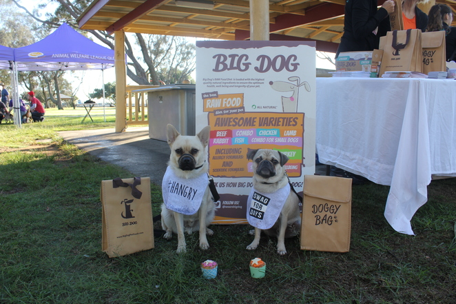 dogs day out, Brisbane, dog event, northern suburbs, Northside, dog friendly, Brighton, decker park, councillor jared Cassidy, awlqld, animal welfare league, fundraiser, animal rescue, charity, shamroq, Brighton dog groomers, dog walk, bramble bay lions, sausage sizzle