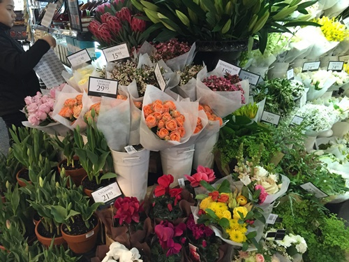 flowers,from,the,Boat,Shed,Cottesloe