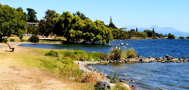 Free, funrun, community, exercise, family, dog friendly, New Zealand, Lake Taupo, parkrun