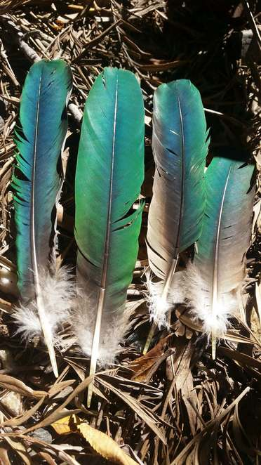 Green bird feathers