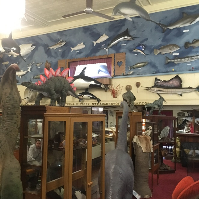 Guildford's Museum of Natural History