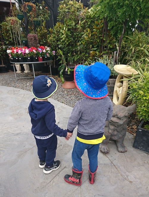 Jungle in Willunga, Nursery Willunga, Plant Shop Willunga,