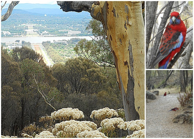 mount ainslie, canberra, summit walk, mount ainslie walk, kokoda memorial trail, ACT, walks, bushwalks, hill walks, exercise