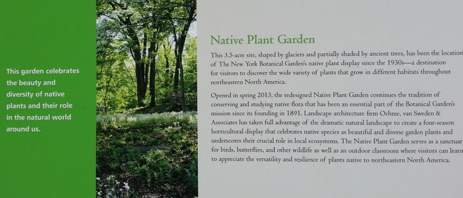 <B>Native Plant Garden, New York Botanical Garden, in the Bronx</B>