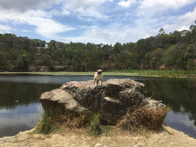 neville lawrie reserve, hike, quarry, dog friendly, dog swim, brisbane, southside, southern suburbs, logan, priestdale, daisy hill forest, quarry, free, nature reserve, hike, walk, picnic area, priestdale