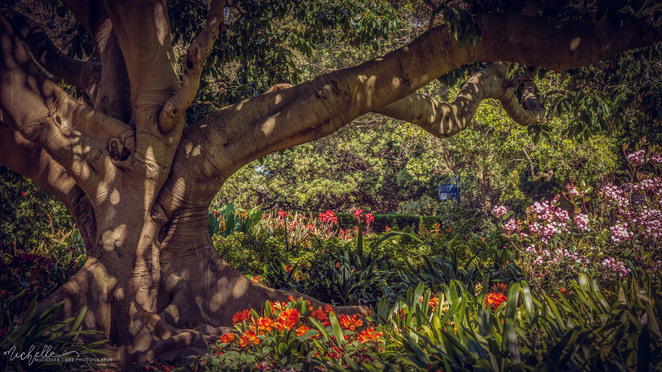The Royal Botanic Gardens, Sydney, Photography