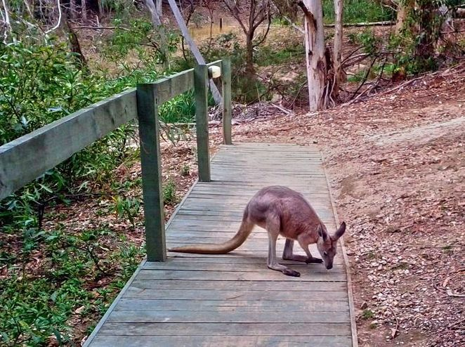 Warrawong Wildlife Sanctuary, warrawong, sanctuary, adelaide hills, ecosystem, crowdfunding, south australian, mylor, wildlife, wallaby