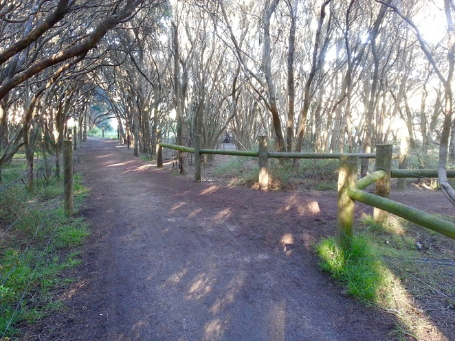 Barwon Heads, Moonah tree forest