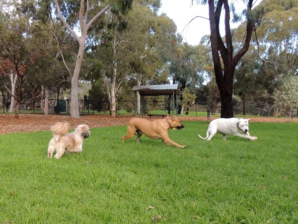 dog parks, south of adelaide, playground in, a playground, playground for children, park in adelaide, play equipment, exercise equipment, cc hood, dogs playing