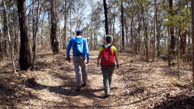 There are lots of fire and forest trails in South D'Aguilar National Park