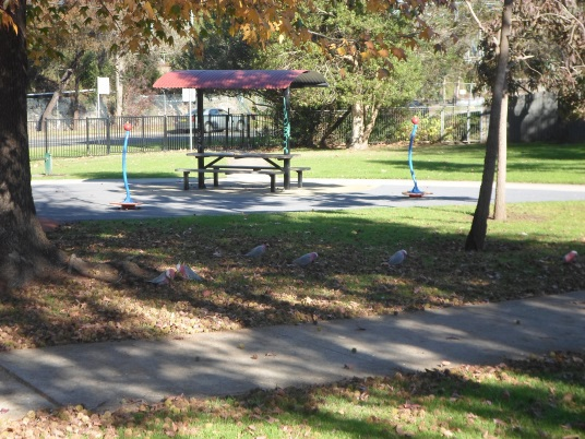 mildred avenue playground, playground in hornsby, hornsby parks, galahs