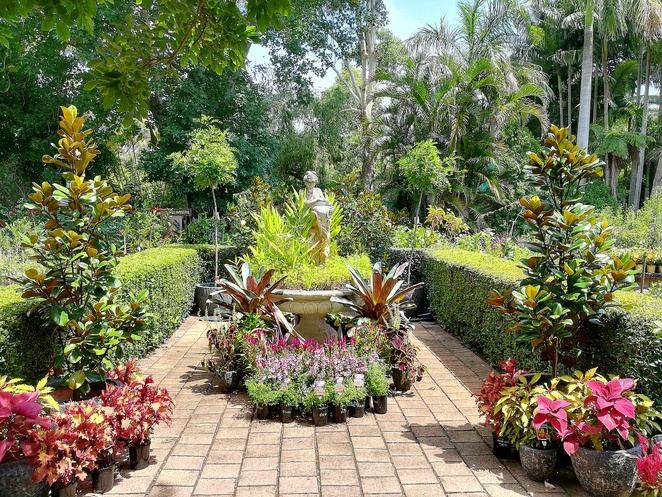 plant trade nursery, plants, gifts, trees, palms, ferns, NSW, port stephens, landscaping, nelson bay, where to buy plants, where to buy trees, nelson bay road,