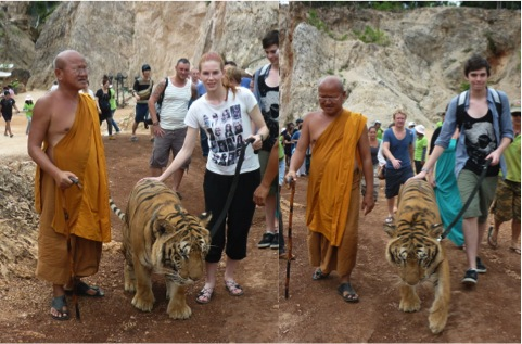 Tiger Temple, Thailand, Zoo, Animals, Tigers, Bear, Monks
