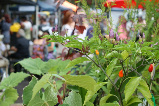 upcycle markets northey street city farm garden plants permaculture organic