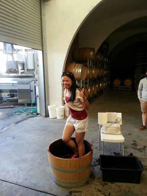 Yarrh Wines Grape stomping