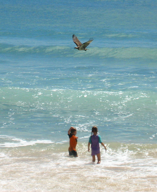 Kids frolicking in the water at Tea Tree Bay