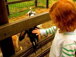 Collingwood children's farm, sheep, feeding, school holidays
