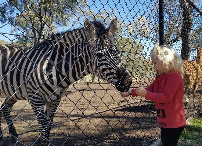 Darling Downs, zoo, family, outing, animals