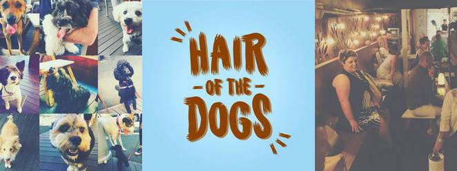 hair of the dogs, atticus finch cafe, paddington, dog cafe, dog friendly, brisbane, dog event, northside, northern suburbs, inner suburbs, dog beer, beerhouse brew, moon dog, parrot dog, free, treats, bar, drinks, alcohol, craft beer