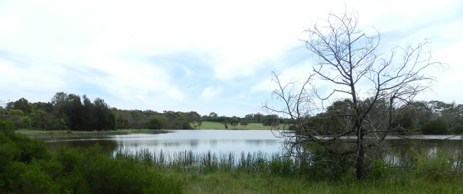 jells lake, jells park, parks in melbourne, lakes in melbourne, walks in melbourne, park, lake,