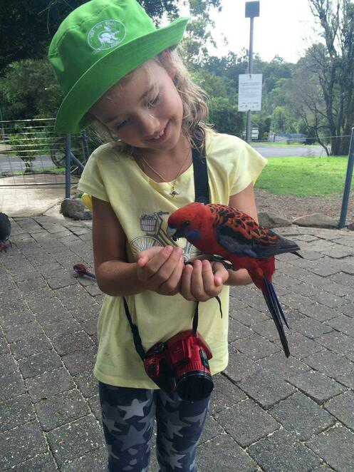 Interacting with wild parrots at O'Reilly's Rainforest Retreat