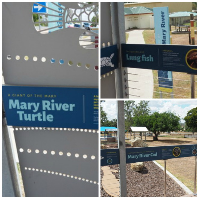 Mary River Lung Fish, Mary River Cod, Mary River Turtle