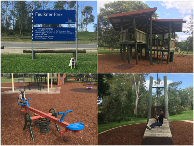 park, faulkner park, dog park, graceville, chelmer, playground, flying fox, swings, dog friendly, picnic, walk, bushwalk