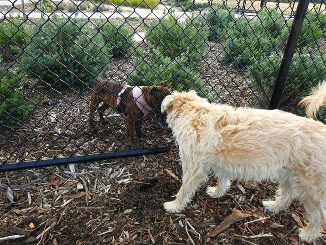 Roy Marten Park, Taperoo, dog park, playground, play, kids, dogs, park, free, meet new friends