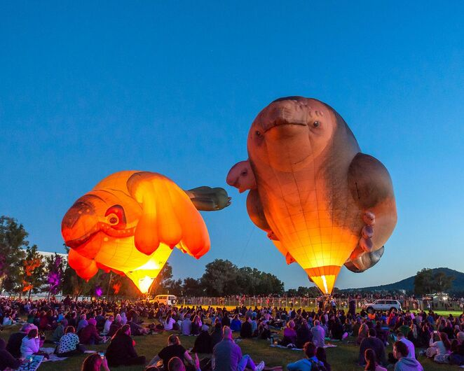 skywhales every heart sings, skywhales tour, skywhalepapa, skywhale family flighs community event, fun things to do, hot air balloon scuptures, maitland regional art gallery, maitland athletics centre, patricia piccinini, skywhalepapa, free sculpture event