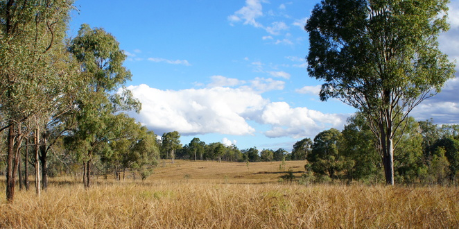 The walk ends passing through open grassy bushland