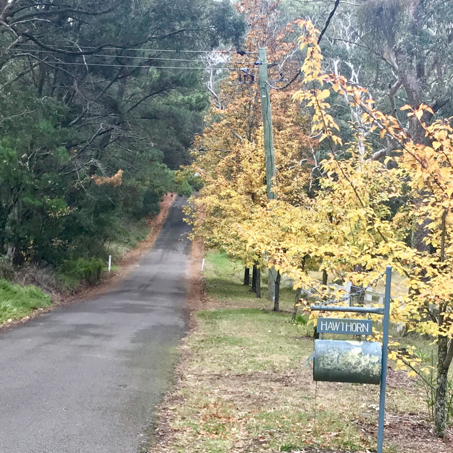 Autumn colours in Blue Mountains