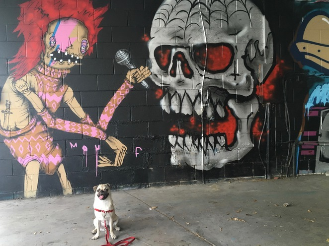 graffiti, street art, brisbane, dog, art, culture, free