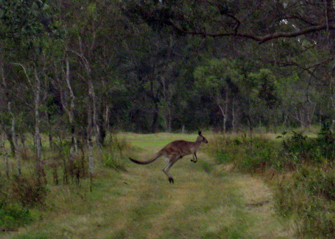Tinchi Tamba is home to a mob of kangaroos