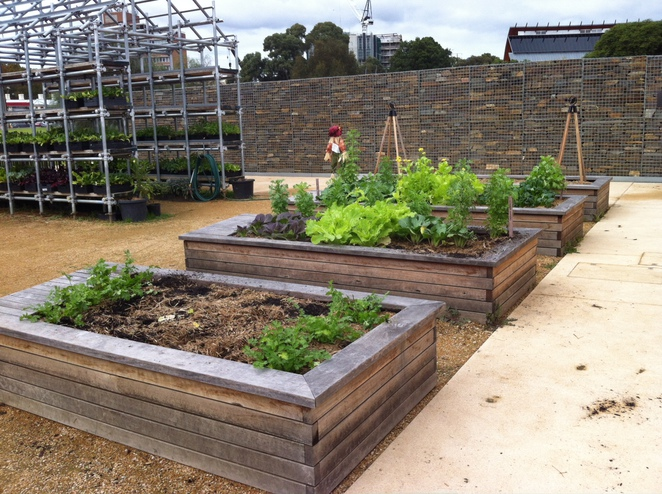 Little Sprouts Kitchen Garden