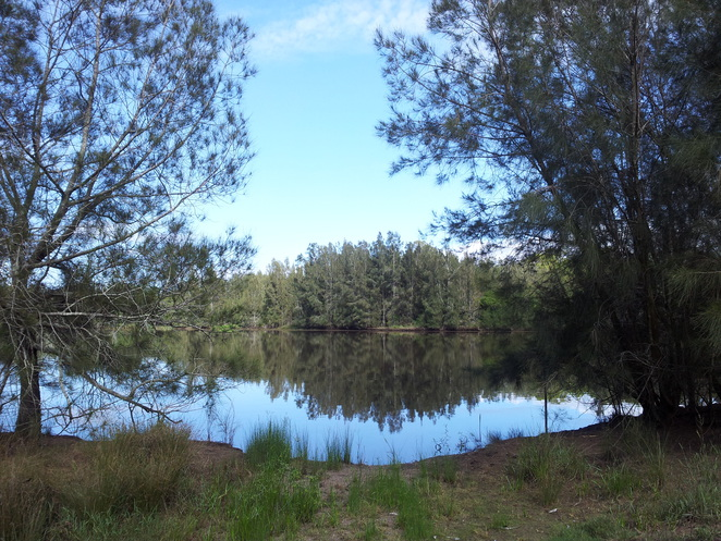 Longneck lagoon, reserves, outdoors, wetlands, environment, black swans, scheyville national park