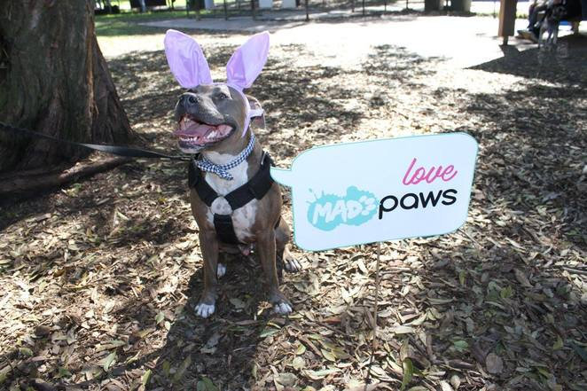 Mad Paws Easter Event 2018, Mad Paws