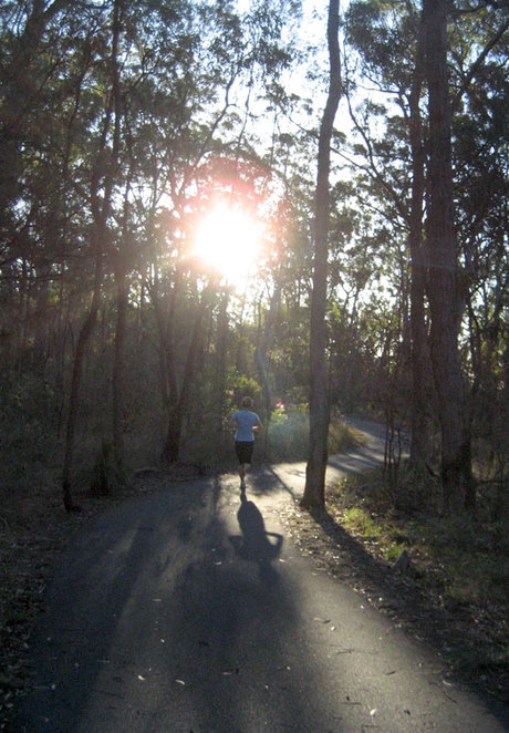 On the trail in Toohey Forest