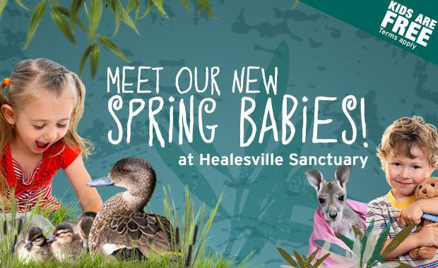 Spring Babies,Healesville Sanctuary,Native Animals,School Holidays,